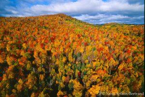 Forêt d'automne dans la région de Charlevoix au Canada