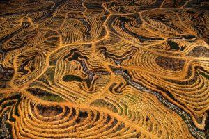 plantation de palmiers à huile à Bornéo