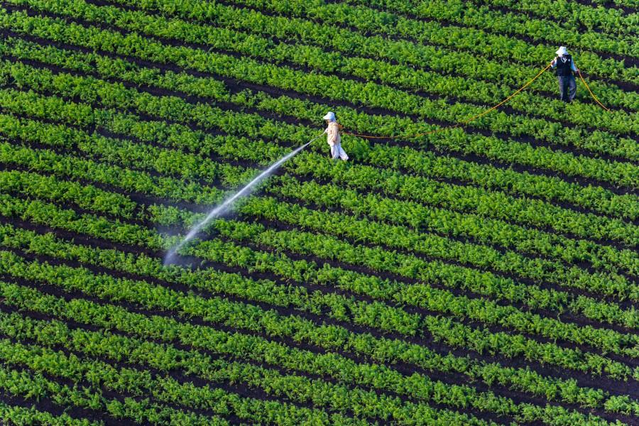 Des cultures aspergées de pesticides en Corée du Sud