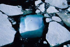 Des pingouins en Terre Adélie dans l'Antarctique