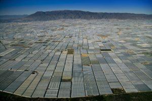 Une étendue de serres en Andalousie